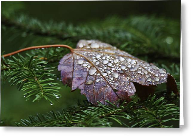 Tree Leaf On Water Greeting Cards - Autumn Splendor Greeting Card by TB Sojka