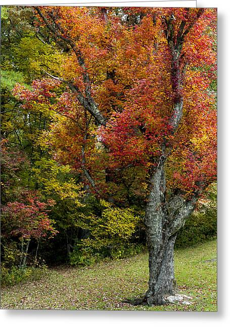 Bathroom Prints Greeting Cards - Autumn Splendor Greeting Card by Terry DeLuco