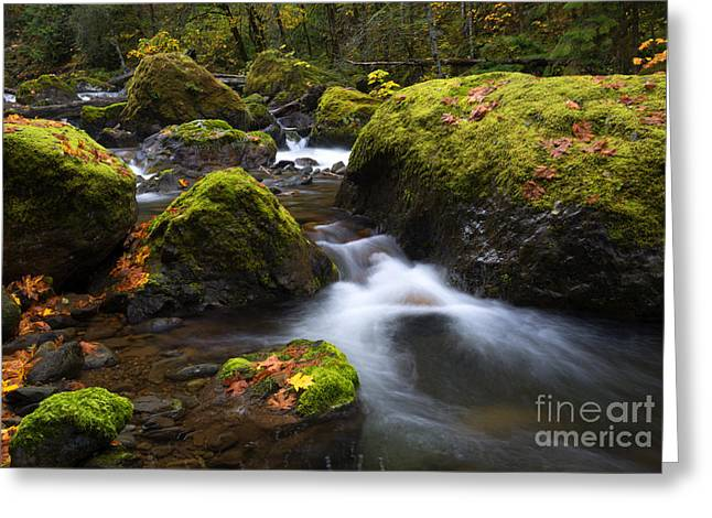 Stream Greeting Cards - Autumn Stones Greeting Card by Mike Dawson