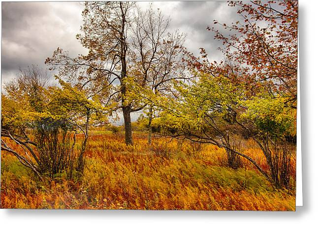 Storm Prints Greeting Cards - Autumn Storm at Dolly Sods West Virginia I Greeting Card by Dan Carmichael