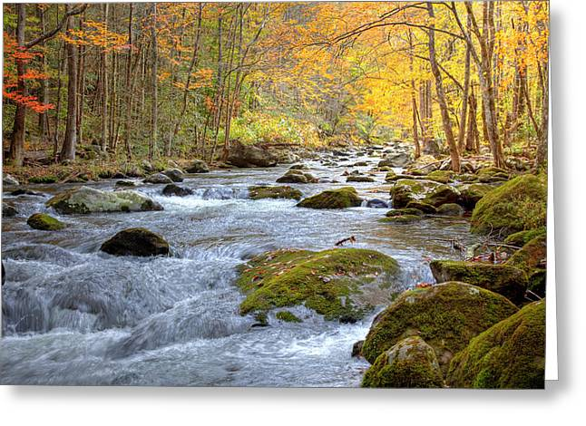 Tennessee River Greeting Cards - Autumn Stream Greeting Card by Judy Kennamer