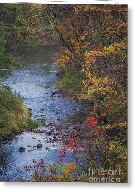 Autumn Stream Greeting Card by Michele Steffey