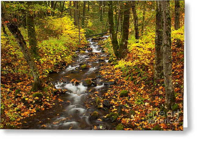 Columbia River Greeting Cards - Autumn Stream Greeting Card by Mike  Dawson