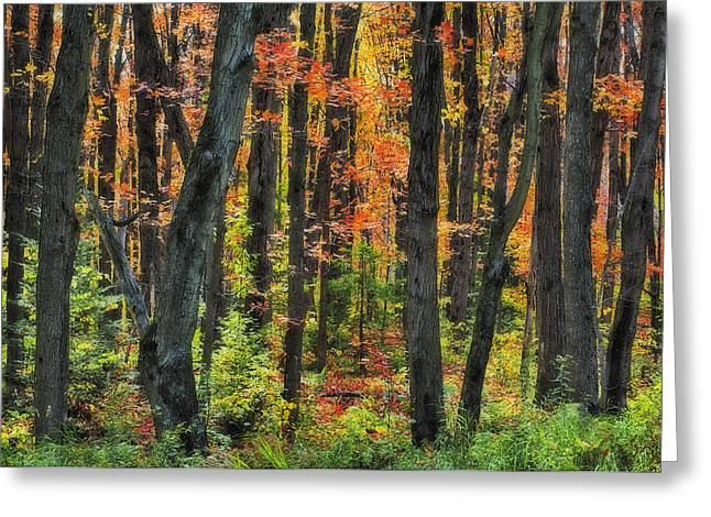 Descriptors Greeting Cards - Autumn Sugar Maple, Yellow Birch And Greeting Card by Thomas Kitchin & Victoria Hurst