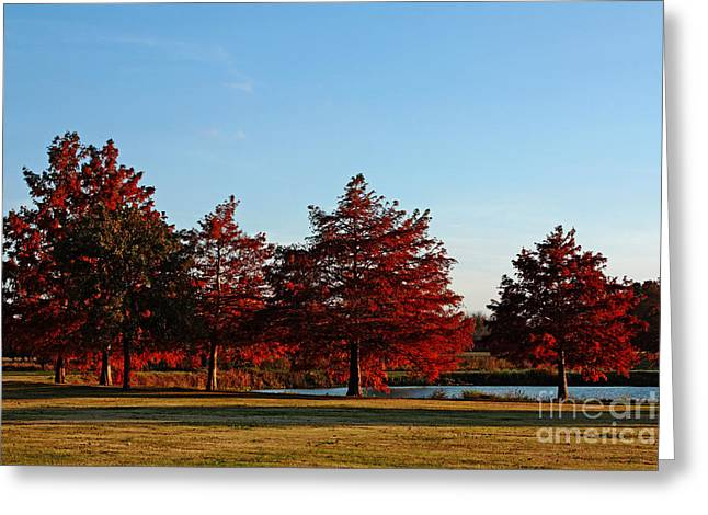 Russet Greeting Cards - Autumn Sunset Greeting Card by Lisa Holmgreen
