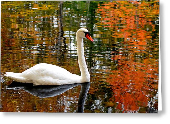New England Autumn Greeting Cards - Autumn Swan Greeting Card by Lourry Legarde