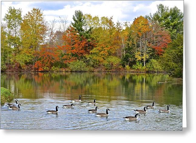 Inner Peace Greeting Cards - Autumn Swim Greeting Card by Frozen in Time Fine Art Photography