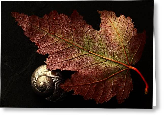 Shell Texture Greeting Cards - Autumn Tapestry Greeting Card by Chrystyne Novack