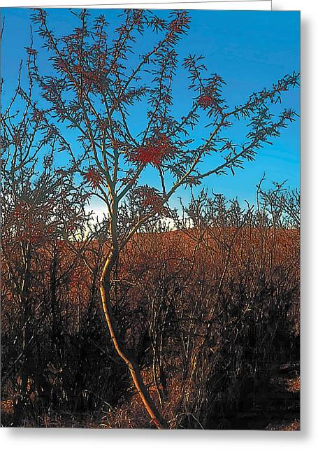 Fall Paintings Greeting Cards - Autumn Greeting Card by Terry Reynoldson