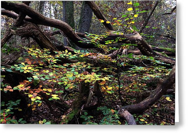 Europe Greeting Cards - Autumn Time in Denmark  Greeting Card by Colette V Hera  Guggenheim