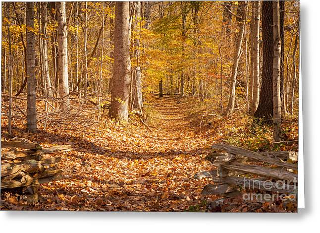 Recently Sold -  - Natchez Trace Parkway Greeting Cards - Autumn Trail Greeting Card by Brian Jannsen