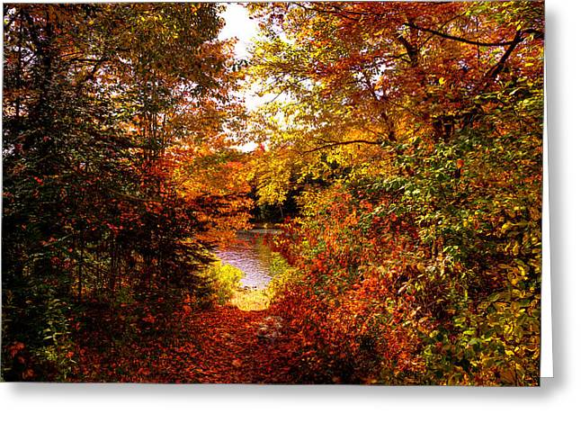 Old And New Greeting Cards - Autumn Trail to the Moose River Greeting Card by David Patterson