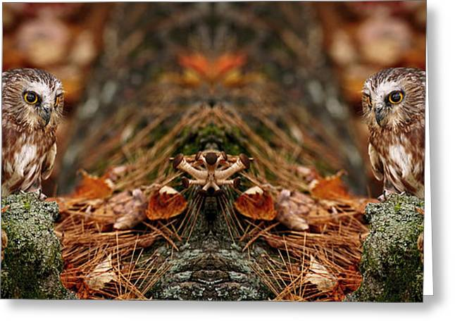 Shelley Myke Greeting Cards - Autumn Treasure- Saw Whet in Forest Greeting Card by Inspired Nature Photography By Shelley Myke