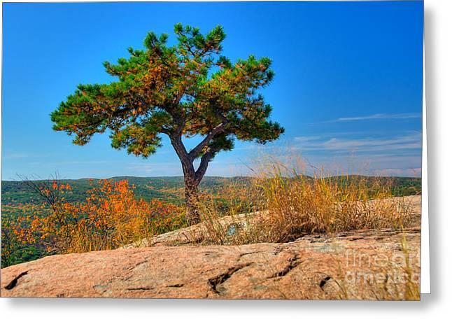 Foilage Greeting Cards - Autumn Tree Greeting Card by Anthony Sacco