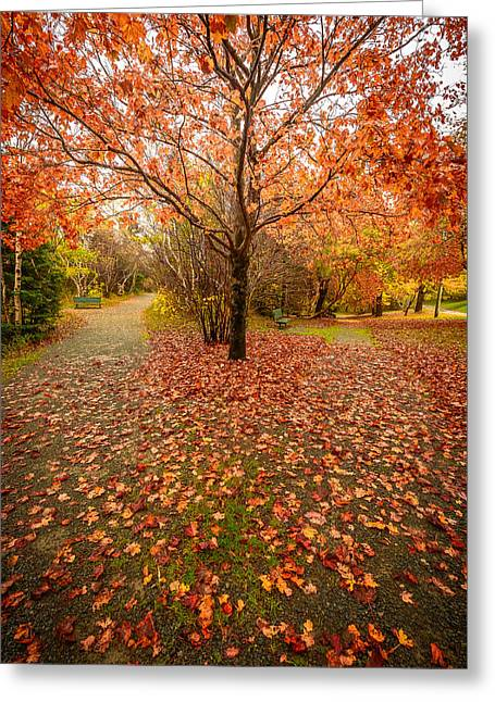 Autumn Photos Greeting Cards - Autumn Tree at Two Paths Greeting Card by Gord Follett