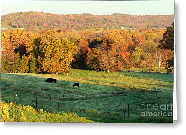 American Sycamore Greeting Cards - Farmland in Autumn Greeting Card by Adam Long