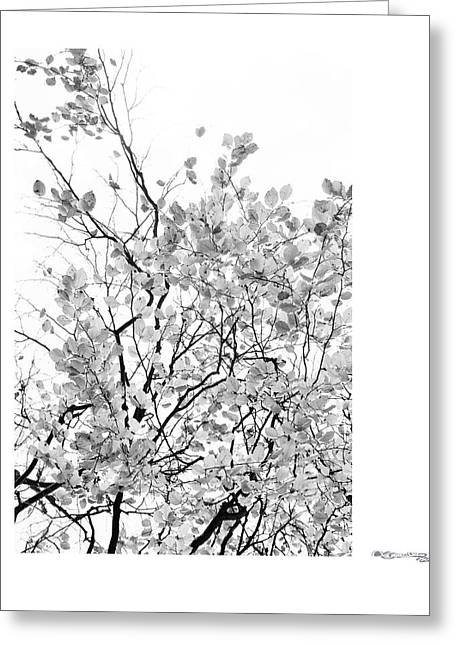 Xoanxo Cespon Photographs Greeting Cards - Autumn tree in black and white 2 Greeting Card by Xoanxo Cespon