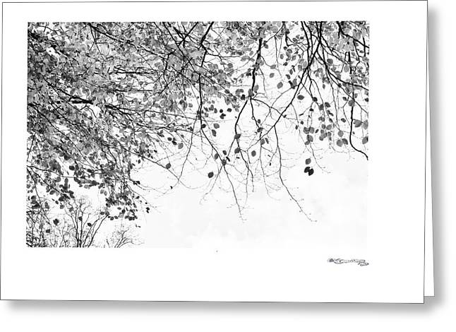 Xoanxo Cespon Photographs Greeting Cards - Autumn tree in black and white 3 Greeting Card by Xoanxo Cespon