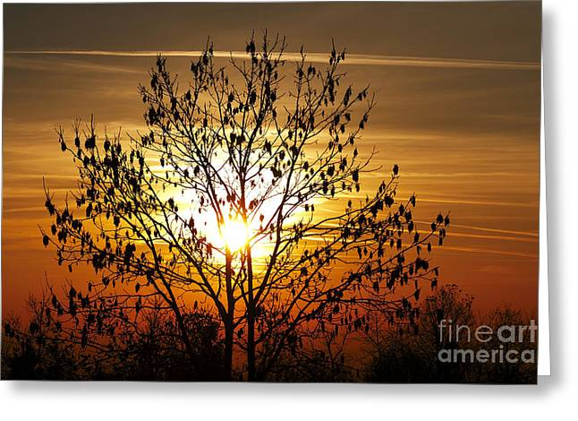 Gloaming Greeting Cards - Autumn Tree In The Sunset Greeting Card by Michal Boubin