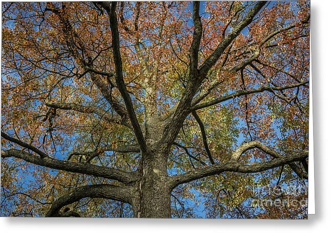 Sour Greeting Cards - Autumn Tree Greeting Card by John Greim