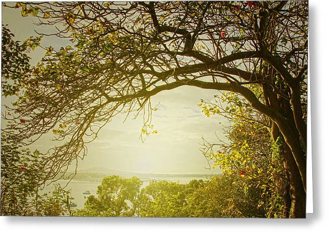 New Zealand Photographs Greeting Cards - Autumn tree  Greeting Card by Les Cunliffe