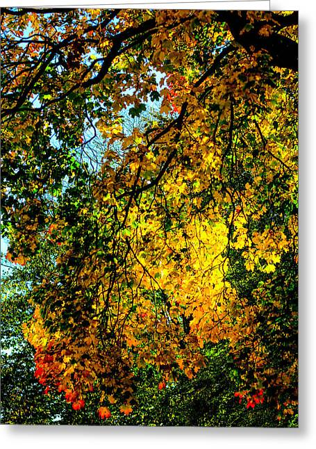 Summer Scene Mixed Media Greeting Cards - Autumn tree  Greeting Card by Toppart Sweden