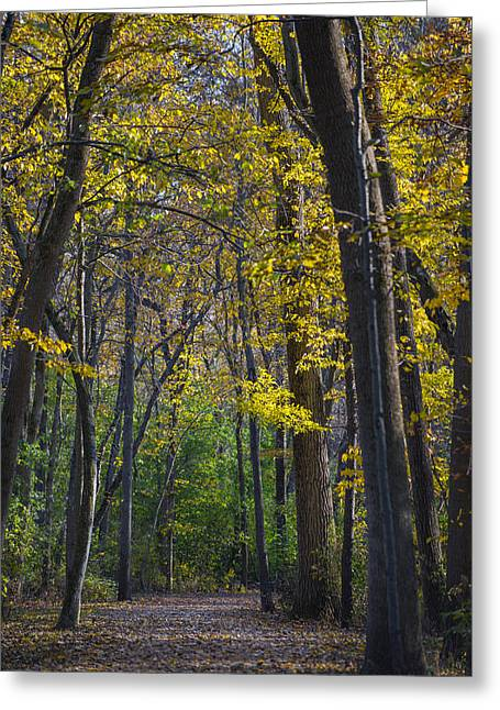 Autumn Trees Alley Greeting Card by Sebastian Musial
