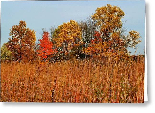 Indiana Autumn Greeting Cards - Autumn Trees and Meadow Grass Greeting Card by Rory Cubel