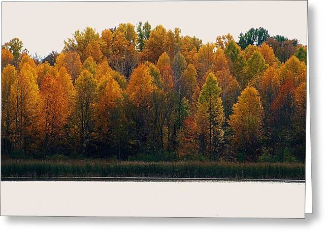 Indiana Autumn Greeting Cards - Autumn Trees and Shoreline Reeds Greeting Card by Rory Cubel