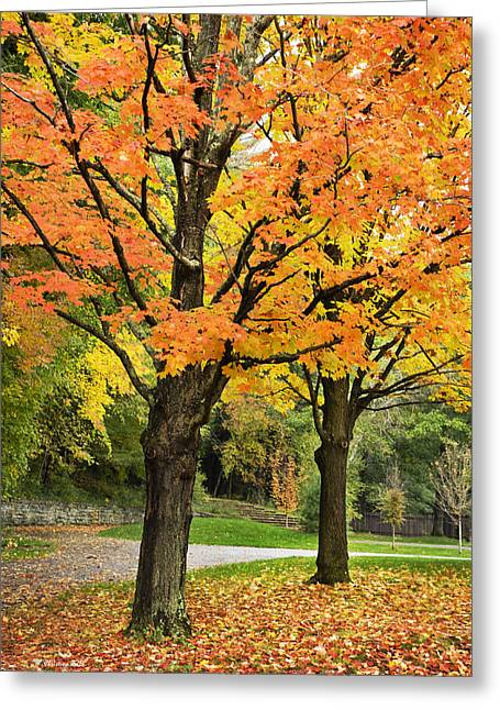 Fall Scenes Greeting Cards - Autumn Trees Greeting Card by Christina Rollo