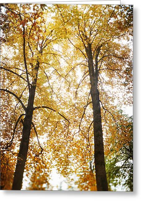 Capitol Hill Greeting Cards - Autumn Trees In A Park, Volunteer Park Greeting Card by Panoramic Images