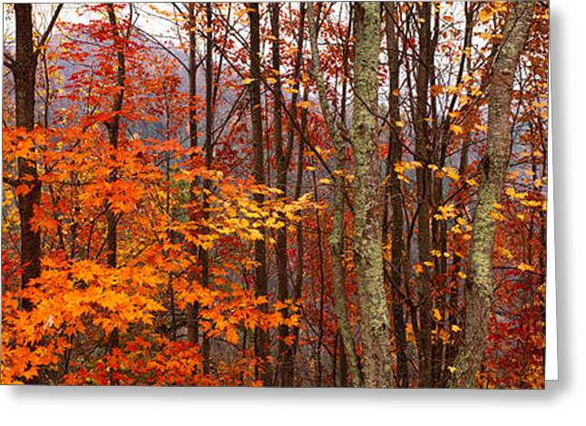 Smoky Greeting Cards - Autumn Trees In Great Smoky Mountains Greeting Card by Panoramic Images