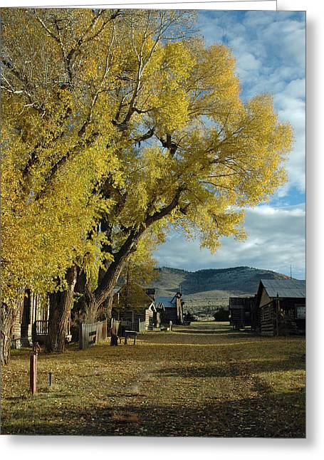 Gold Trout Greeting Cards - Autumn Trees in Nevada City Montana Greeting Card by Bruce Gourley