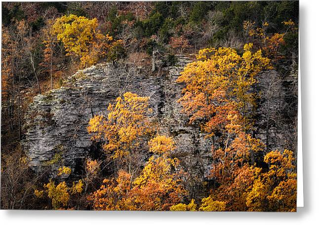 Mt Magazine Greeting Cards - Autumn Trees Greeting Card by James Barber