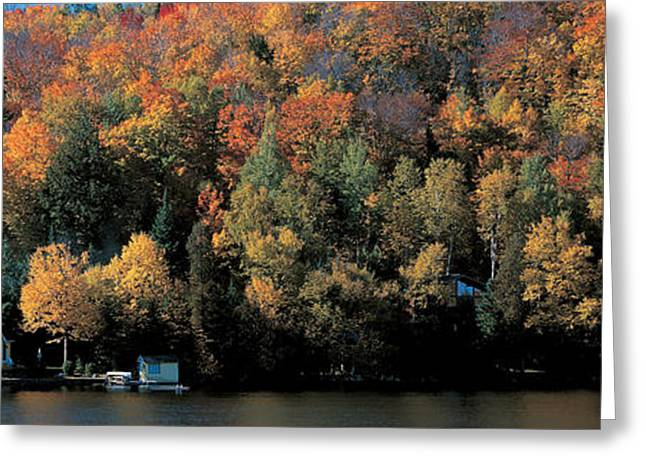 Autumn Trees Laurentide Quebec Canada Greeting Card by Panoramic Images