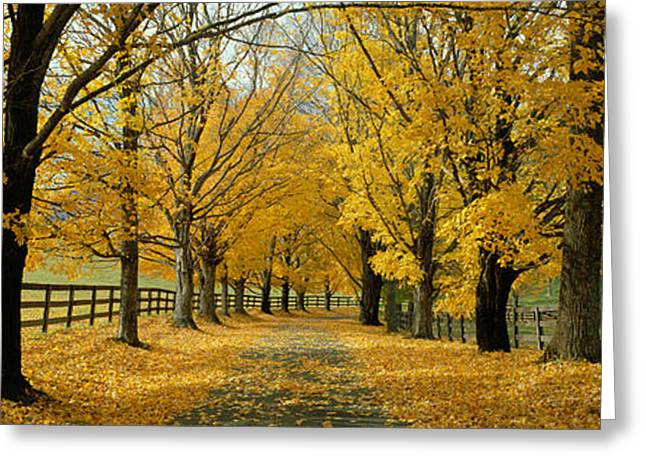 Tree Lines Greeting Cards - Autumn Trees Near Waynesboro Virginia Greeting Card by Panoramic Images