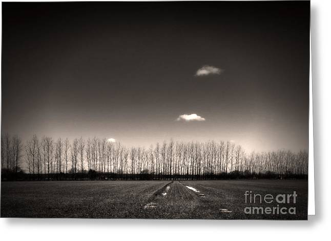 Black Clouds Greeting Cards - Autumn Trees Greeting Card by Stylianos Kleanthous