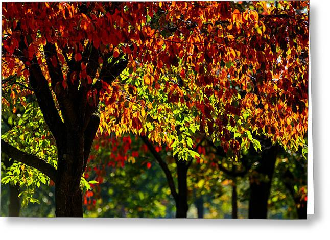 Bokeh Mixed Media Greeting Cards - Autumn trees  Greeting Card by Toppart Sweden