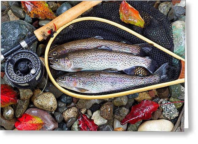 Rainbow Trout Greeting Cards - Autumn Trout Fishing  Greeting Card by Tom  Baker