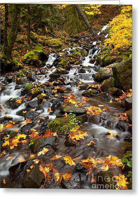 Columbia River Greeting Cards - Autumn Tumbles Down Greeting Card by Mike  Dawson