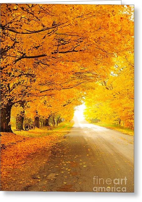 Fall Colors Greeting Cards - Autumn Tunnel of Gold 7 Greeting Card by Terri Gostola
