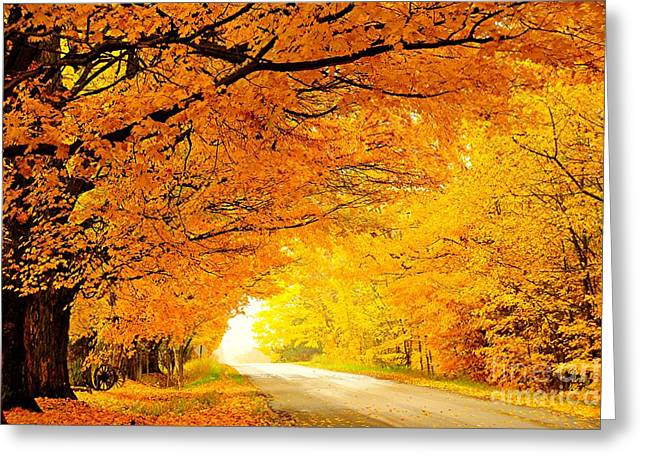 Country Greeting Cards - Autumn Tunnel of Gold Greeting Card by Terri Gostola