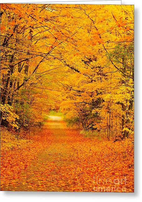 Autumn Trees Greeting Cards - Autumn Tunnel of Trees 14 Greeting Card by Terri Gostola