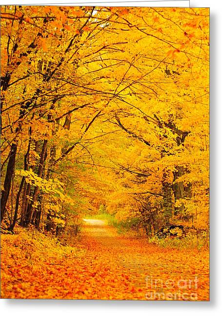Autumn Trees Greeting Cards - Autumn Tunnel of Trees 16 Greeting Card by Terri Gostola