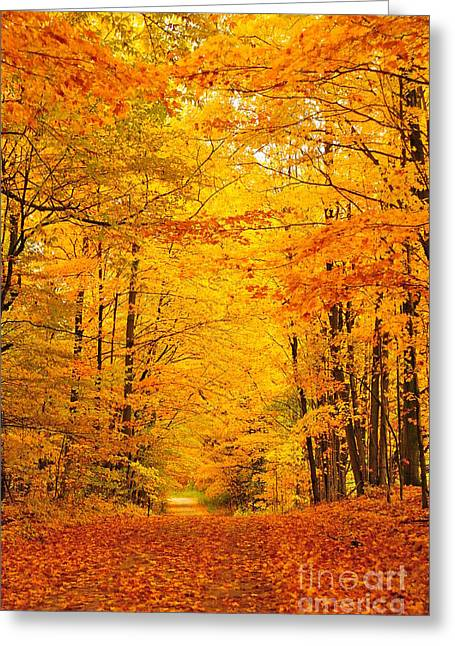 Autumn Trees Greeting Cards - Autumn Tunnel of Trees 21 Greeting Card by Terri Gostola