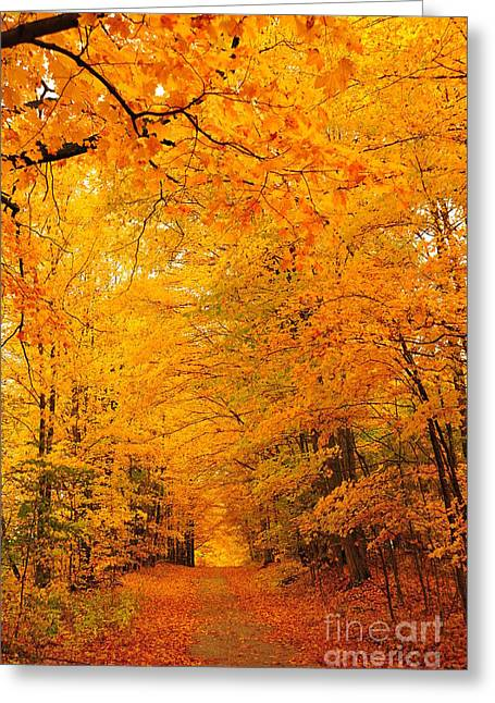 Fall Colors Greeting Cards - Autumn Tunnel of Trees 3 Greeting Card by Terri Gostola