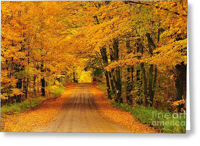 Landscapes Greeting Cards - Autumn Tunnel of Trees 33 Greeting Card by Terri Gostola