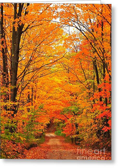 Decorator Set Greeting Cards - Autumn Tunnel of Trees Greeting Card by Terri Gostola