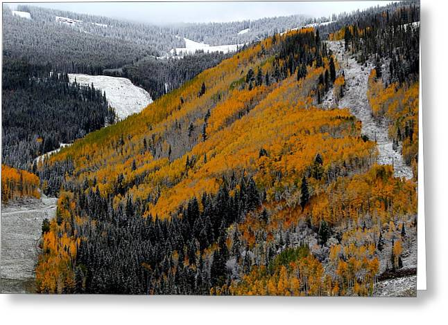 Ski Art Greeting Cards - Autumn Turns Into Winter Greeting Card by Fiona Kennard