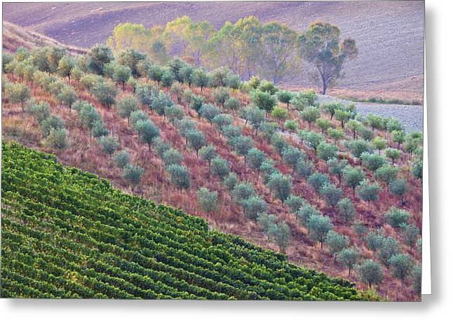 Autumn Tuscan Fields Greeting Card by Eggers Photography